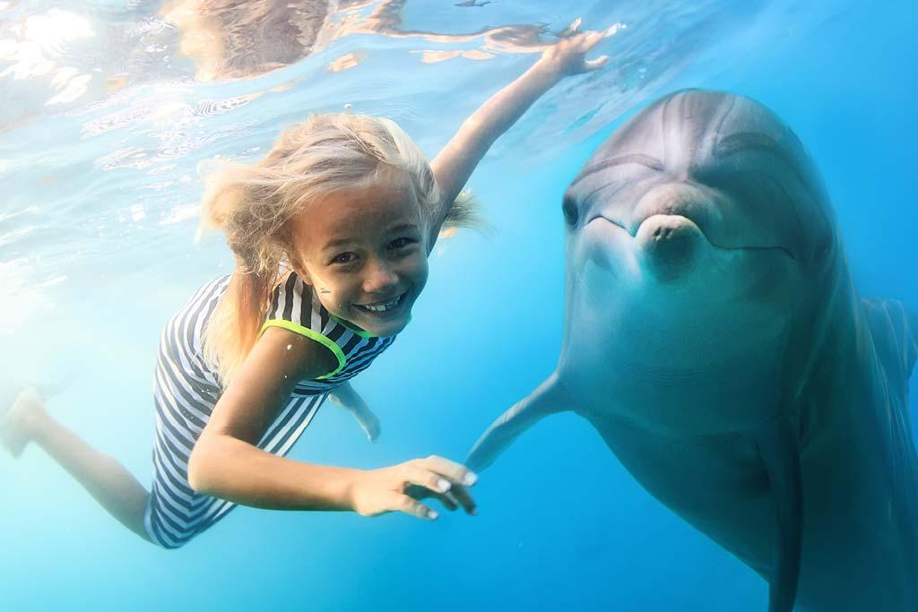 顶级海豚体验