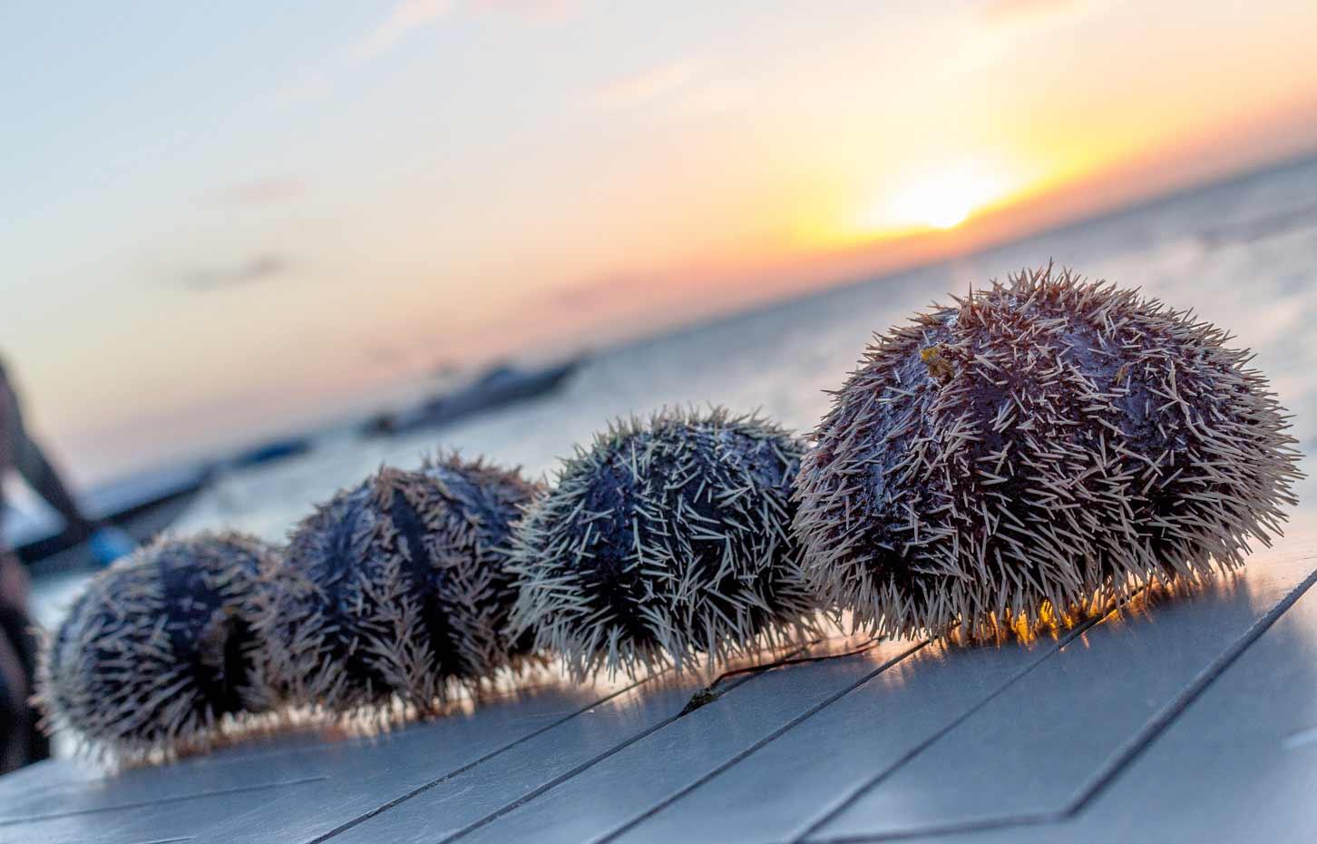 落日,沙滩和新鲜海胆