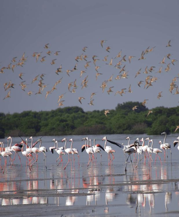 Al Zorah自然保护区